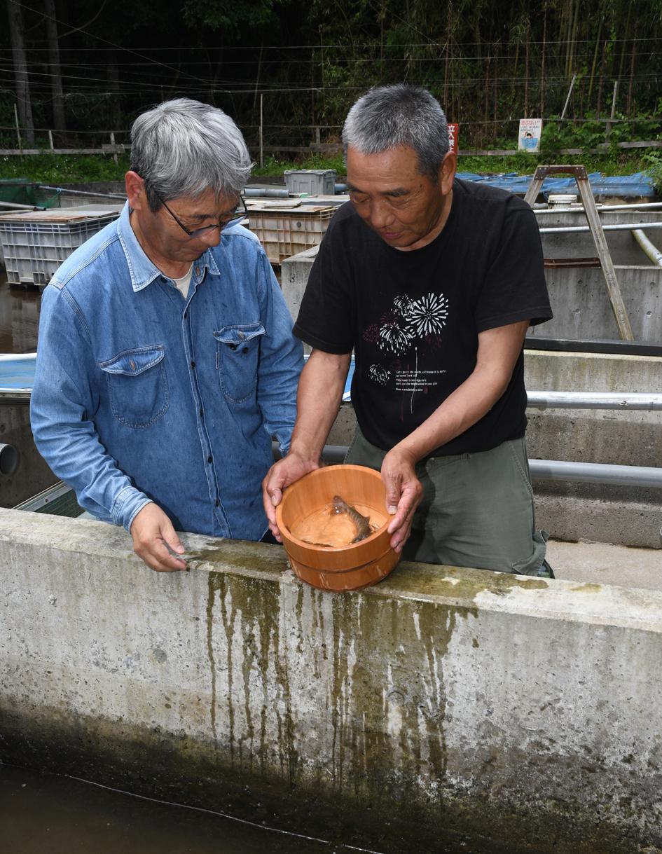 ヤマメを見つめる小野崎さんと、メンバーの坂本豊樹さん