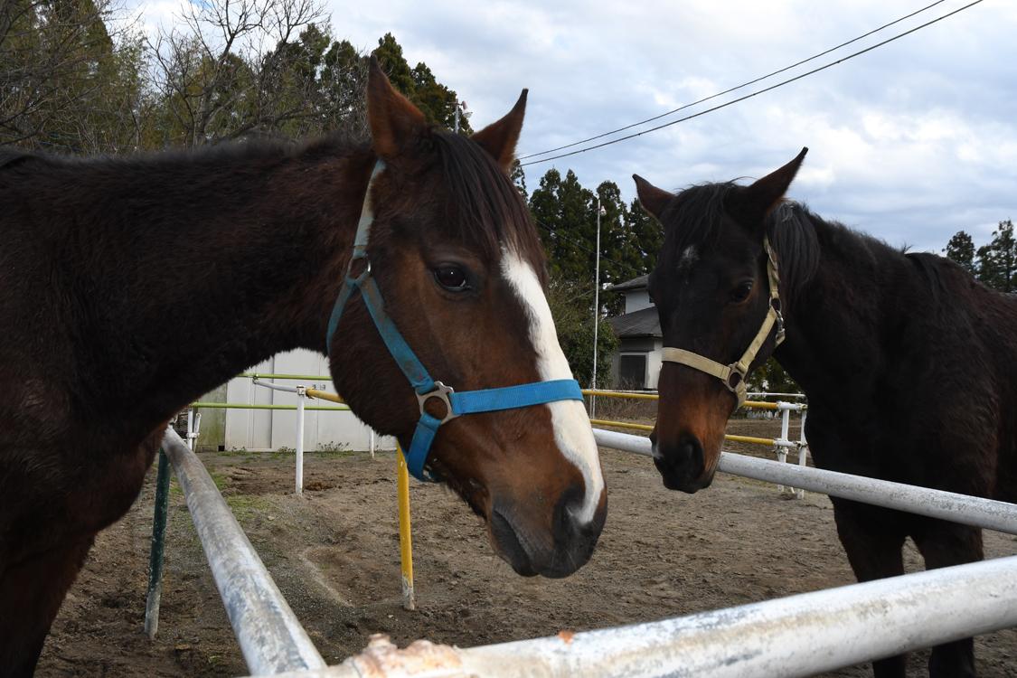 東海馬事苑の馬