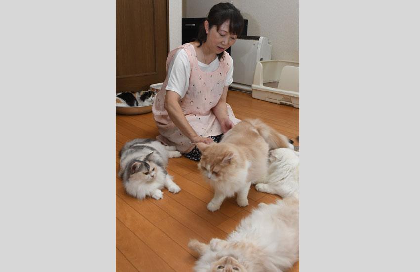カフェで猫の世話をする山本さん