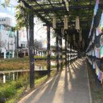 あやめ園で風のイベント 通路に風鈴や短冊飾る