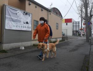 間もなく誕生 盲導犬ハティ いばらき盲導犬協会