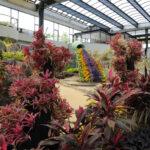 南国や砂漠も巡る屋内散歩 29日再開の水戸市植物公園の温室
