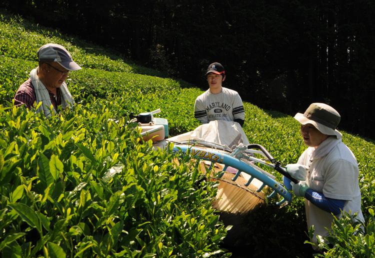 菊池さんと、収穫する生徒